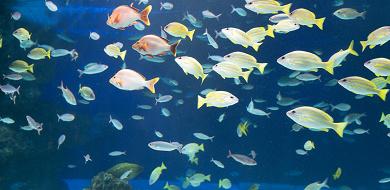 【2020】サンシャイン水族館の混雑は?平日&土日祝・長期休みの混み具合・特に混雑する人気スポットまとめ!