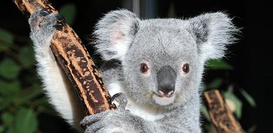 【2020】多摩動物公園のランチ!コアラ弁当・ランチセットおすすめレストラン解説!お弁当の持ち込みは?