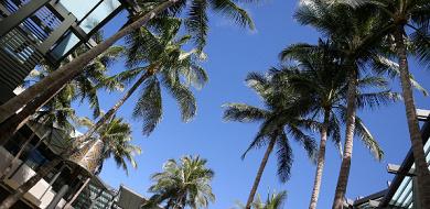【ハワイ】ホノルルの気温と服装ガイド!年間平均気温、天気、月別おすすめの服装も