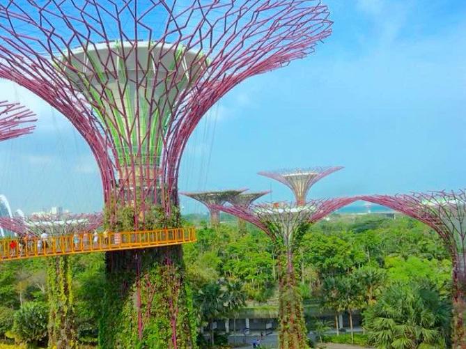 【シンガポール】2大植物園の特徴を比較!ガーデンズバイザベイとボタニックガーデンを観光しよう