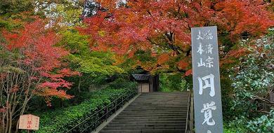 【鎌倉】円覚寺の見どころを紹介!関東最大の鐘や迫力満点の白龍図を見に行こう!