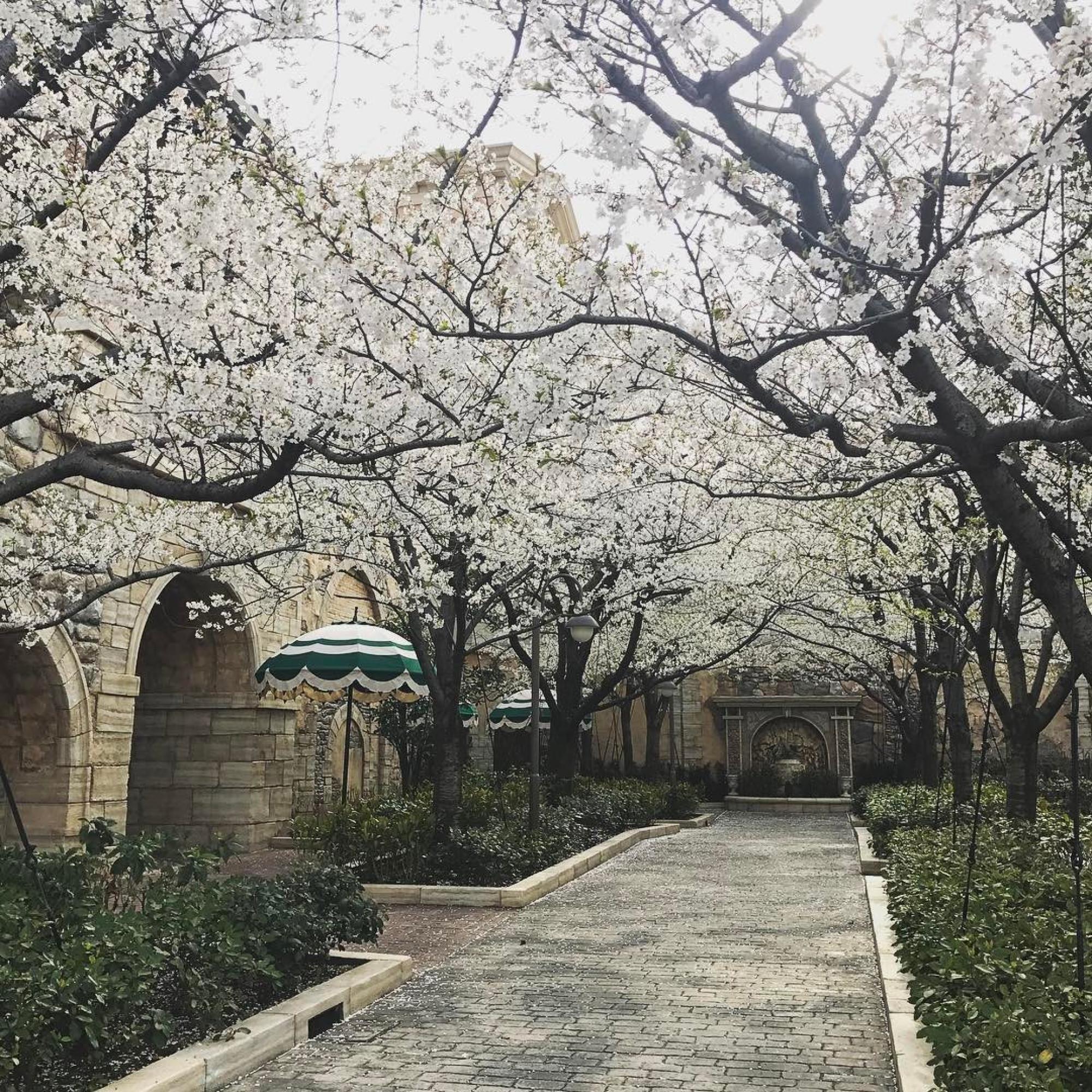 桜がきれいなピクニックエリア
