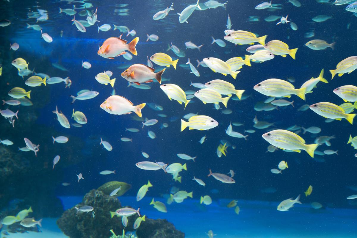 サンシャイン水族館の水槽