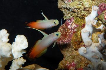【新江ノ島水族館】場所・営業時間・料金まとめ!おすすめのショー&展示も!