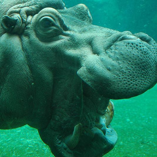 天王寺動物園:【おすすめ③】リアルな生態的展示