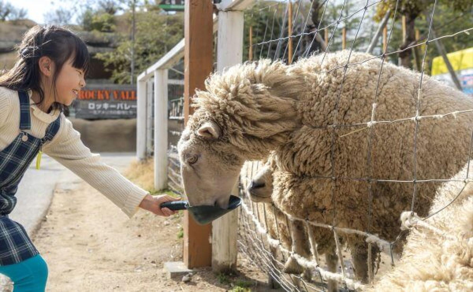 羊ふれあい