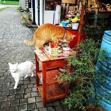 【台湾】ネコだらけと話題の「猫村」を紹介!アクセスや雑貨屋、おすすめカフェ情報も♪