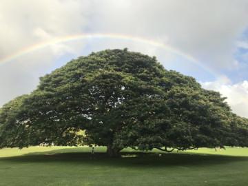 【必見】ハワイの雨季は10月〜3月!ベストシーズンはいつ?雨のハワイを満喫する方法も!
